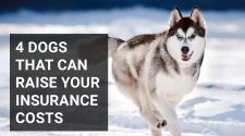 4 dogs that can raise your insurance costs