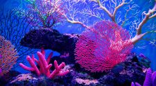 AMAZING FACTS YOU SHOULD KNOW ABOUT CORAL REEFS