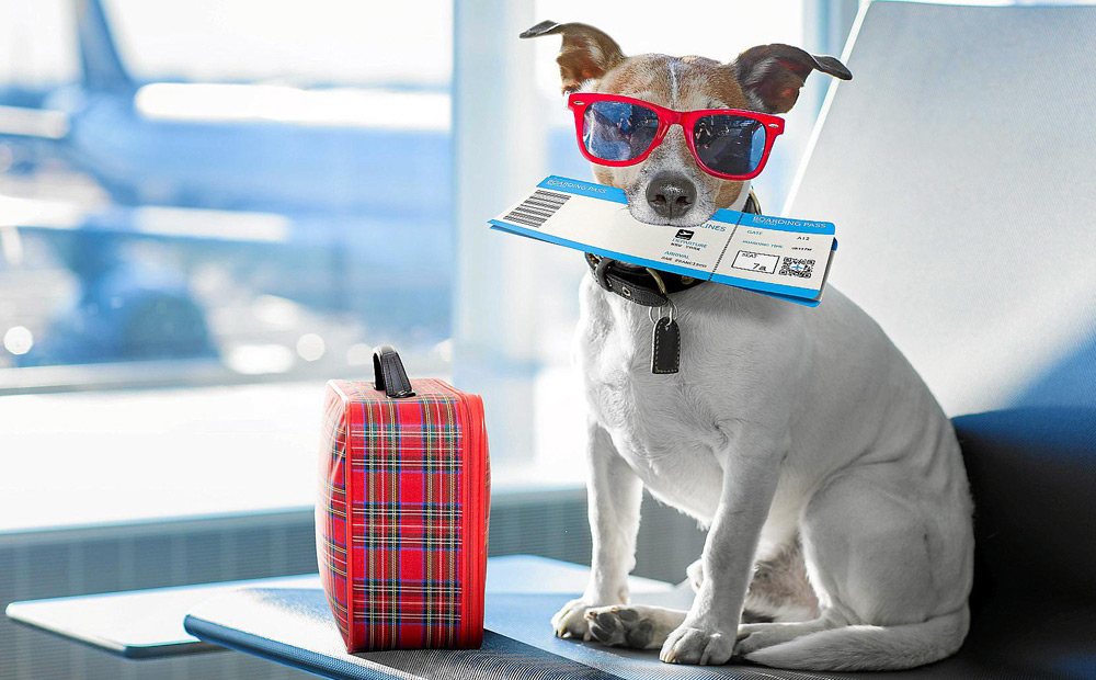 EVERYTHING-YOU-SHOULD-KNOW-ABOUT-TRAVELLING-WITH-PETS
