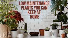 If you are a plant lover but cannot take out time to look at your plants, here are few plants that you can keep at your home easily.